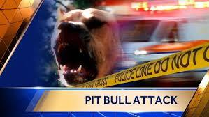 Pitbull Attack.bmp
